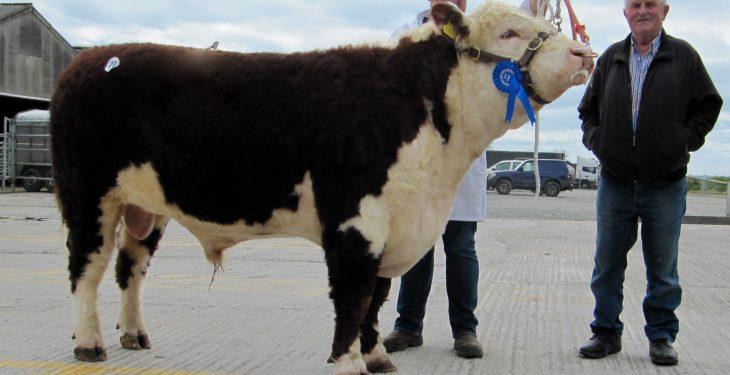 Pics: Hereford bulls reach a €2,880 average at Kilmallock sale