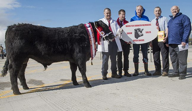 Top price of €3,650 paid at Munster Angus Premier Sale