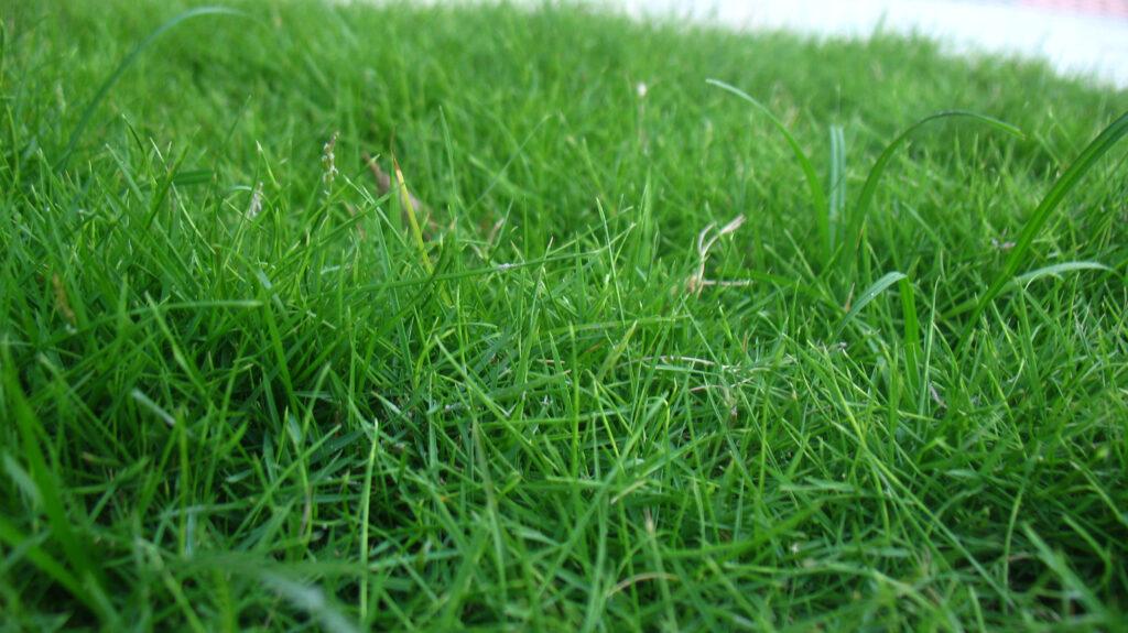 Grass soil nitrogen humus