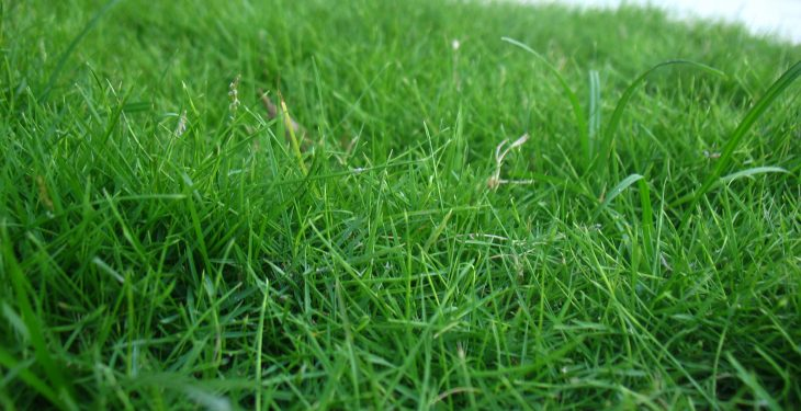 GrassCheck: 'You can grow as much as you like, but you need to use it well too'
