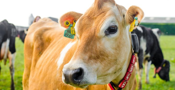 Chinese dairy imports to increase by 20% in 2017
