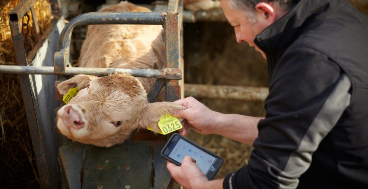 Farmers take an app-savvy approach to calf registrations