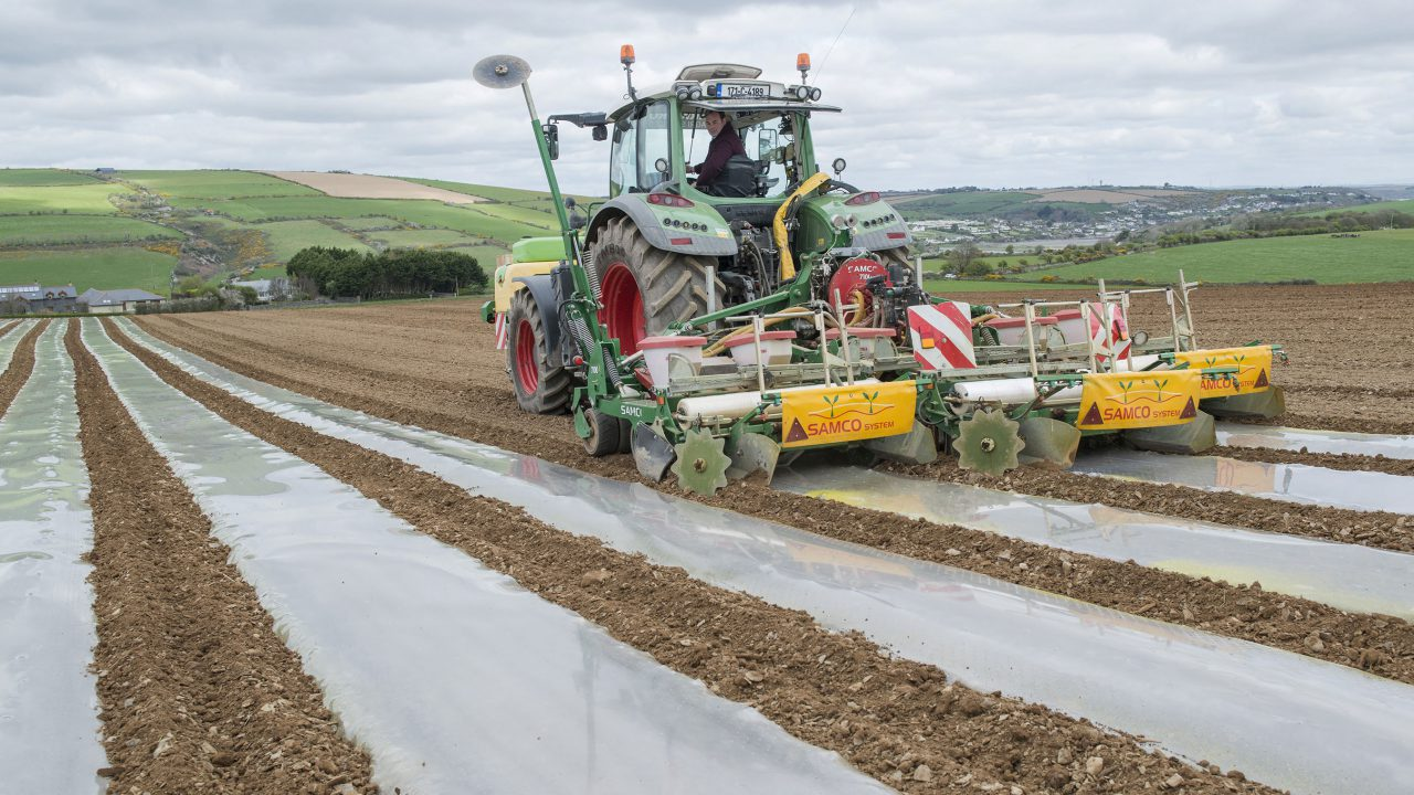 'Conditions for sowing maize are good at the minute'
