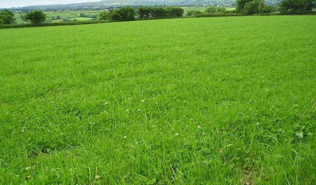 Grass advice: Making the most of your 'cover'