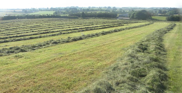 Is wilting grass silage really important?