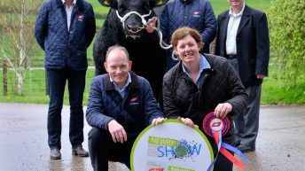 Newry Show 2017 to host Aberdeen Angus extravaganza