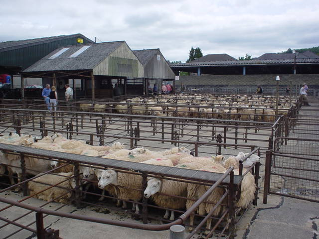 Mart report: Sheep numbers tight over Easter weekend