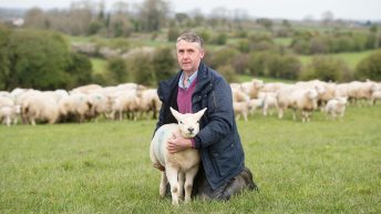 Supervalu predicts spring lamb sales in 2017 to equal €17m