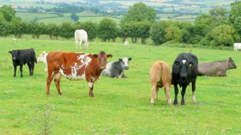 Beef training and research facilities are 'out of date'