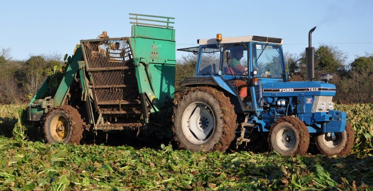 Tremendous potential to expand fodder beet output in Ireland