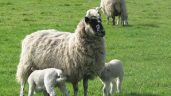 Top tips: Best-practice grassland management for sheep farmers