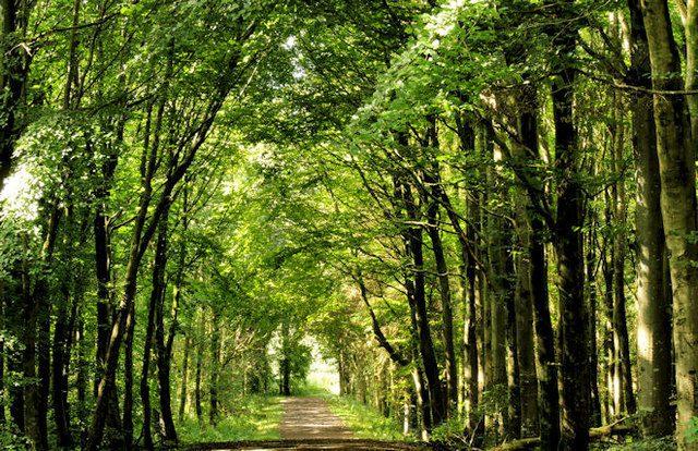 Microsoft backs new afforestation initiative