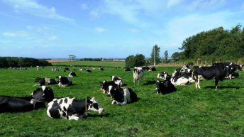 IFA and ICMSA remain positive ahead of April milk price announcements