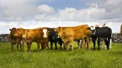 Teagasc to host virtual beef conference next week