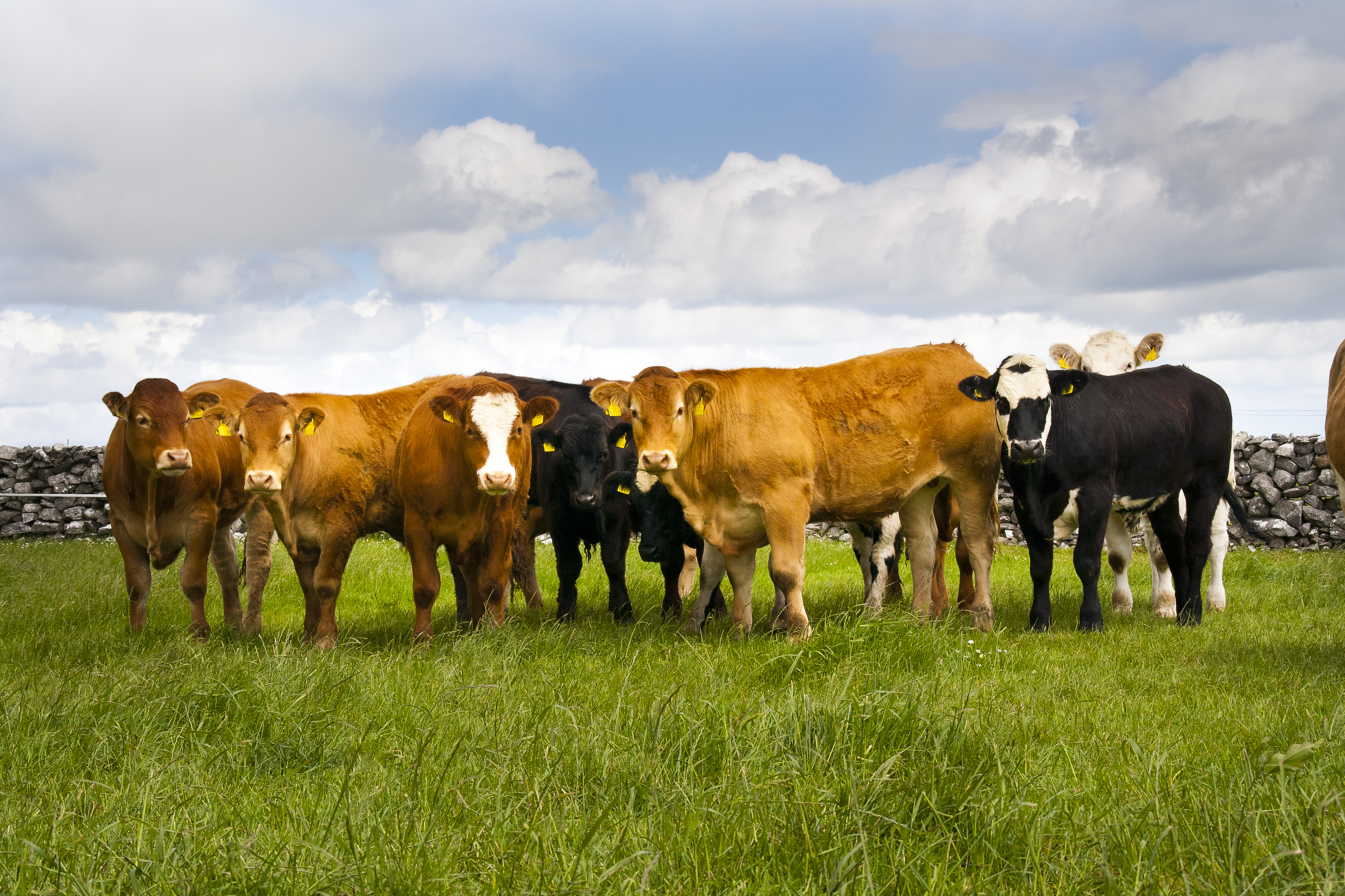 the role of the farm assurance scheme in food safety A review of the beef food chain  fqas farm quality assurance scheme fsa food standards agency  respect to food safety issues however, quality assurance marks .