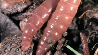 Is ploughing driving your earthworms away?