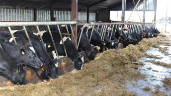 UFU warns of mounting pressure on NI farmers over Brexit