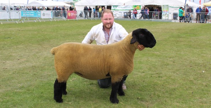Elite Suffolk ewe lifts Balmoral Interbreed Sheep Championship
