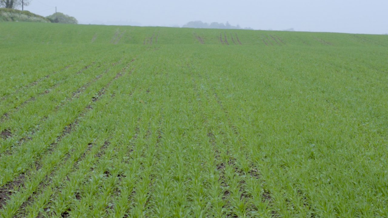 CROPS WATCH UPDATE: Pig slurry works wonders for spring barley establishment