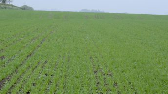 CROPS WATCH UPDATE: Pig slurry works wonders for spring barley establishment