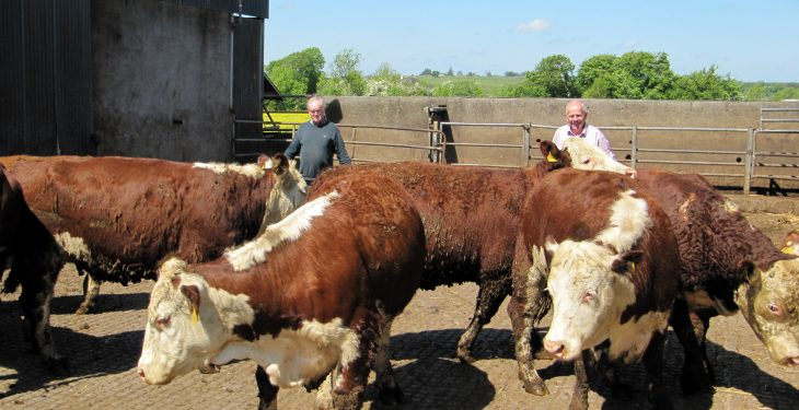 Over 100 pedigree Irish Herefords depart for Russia