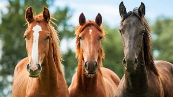 As healthy as a horse: Equine seminar set for next month