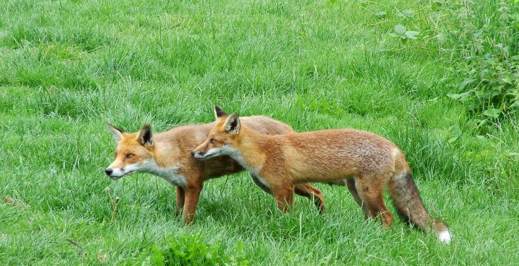 Proposed ban on night-time hunting between September and March