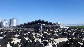 'New Zealand was my university in dairy farm management'