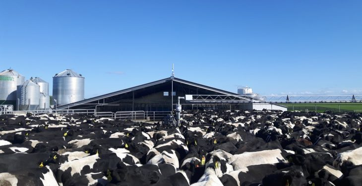 Around 1,200 samples tested for contagious cattle disease in NZ