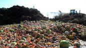 今年圣诞节鼓励家庭和企业减少食物浪费