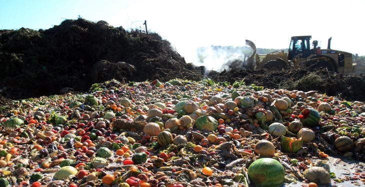 'Focus on food waste instead of food production' – ICSA