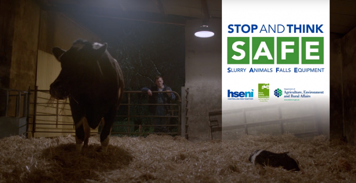 Video: Chilling farm safety advert highlights the danger of freshly calved cows