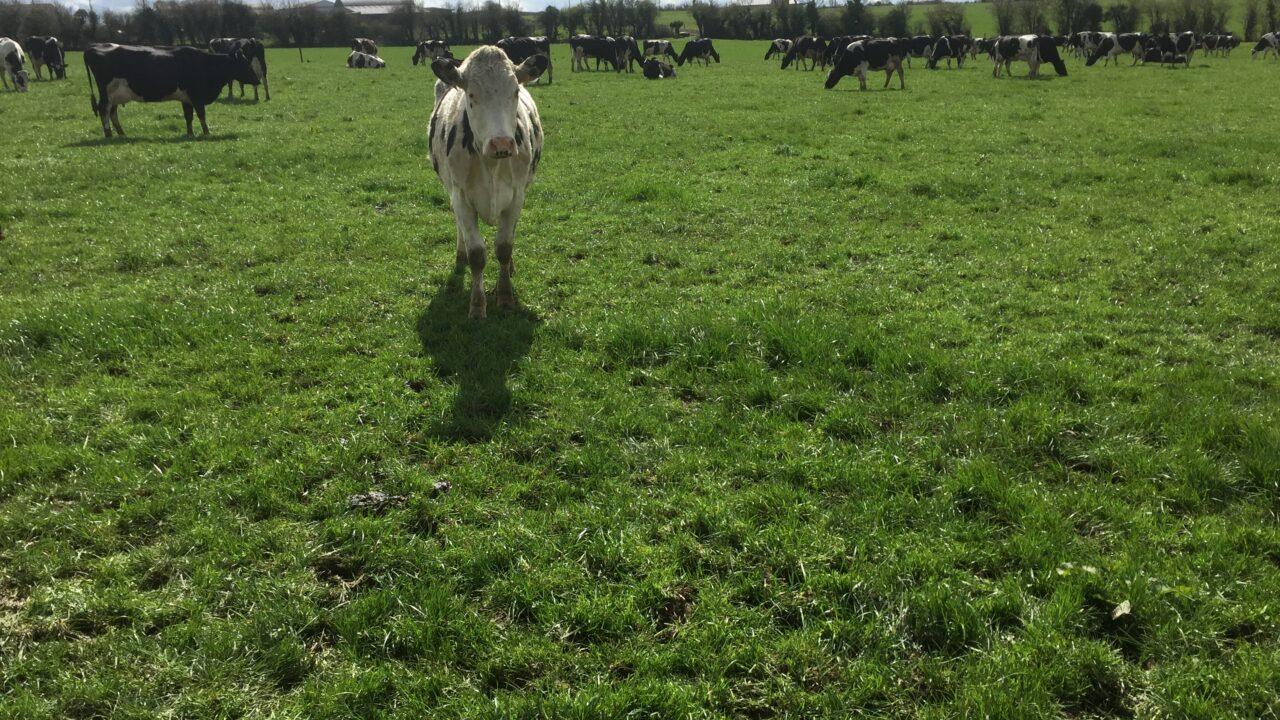 Don't let rain scupper June grazing