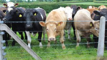 'Beef is in serious, serious trouble' – Jim Power
