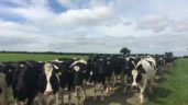 Farm focus: Milking 355 cows in the midlands