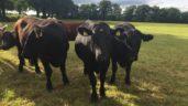 €1 million boost for June steer finishers