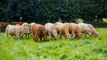 WTO tariffs would have a 'crippling effect' on beef