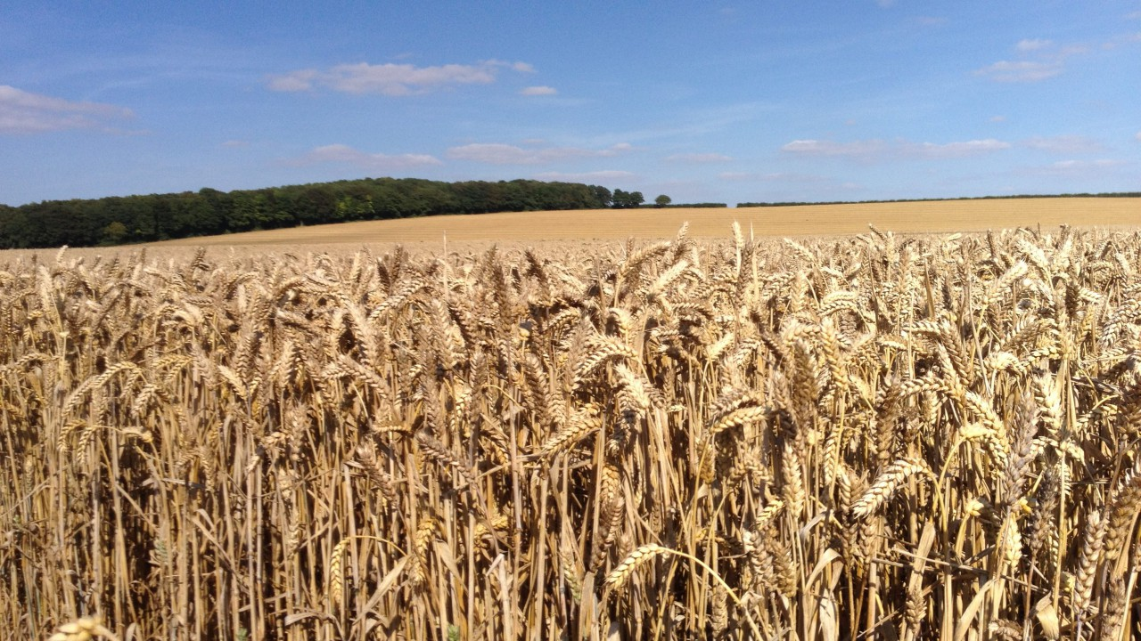 'IPM could be key to reducing chemical usage'
