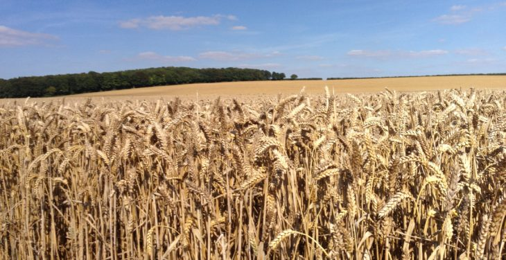 Grain price: UK wheat in the red this week