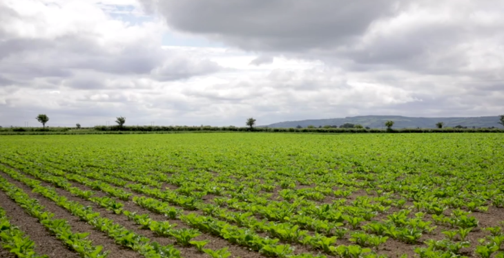 CROPS WATCH UPDATE: The importance of boron for beet crops