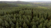 Forestry service 'breaking own rules and turning a blind eye in Leitrim'