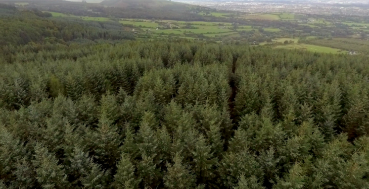 Should afforestation require planning permission?