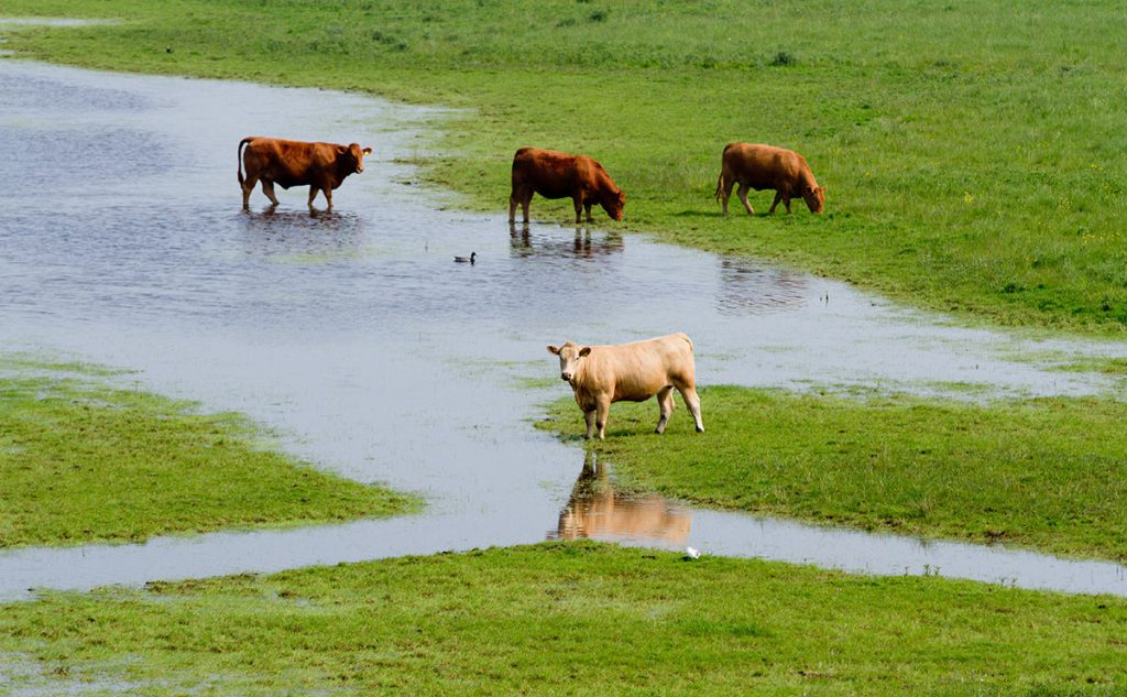 how to stop a farm from flooding