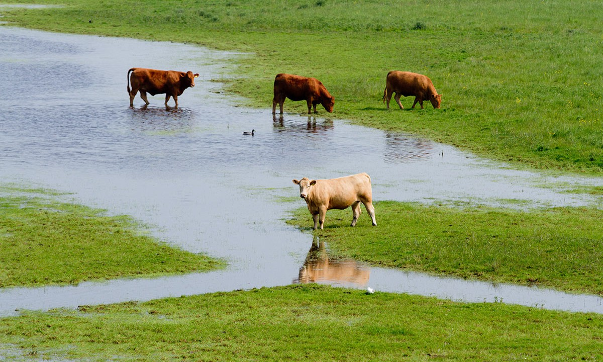Flood-hit farmers to receive departmental assistance to dispose of fallen animals
