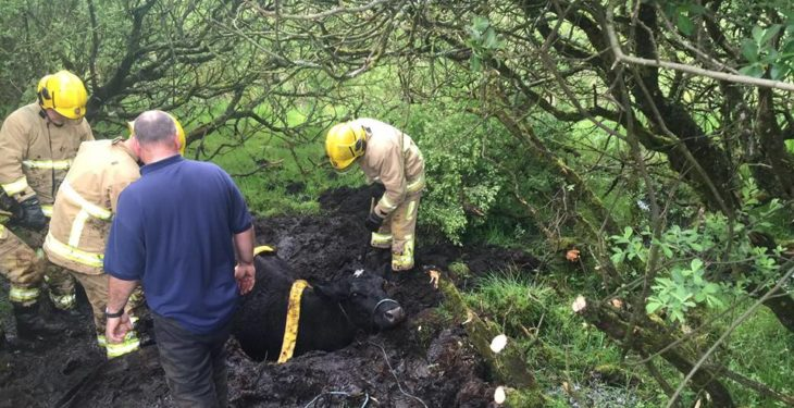 Pics: Firefighters come to the aid of two separate farmers to rescue animals