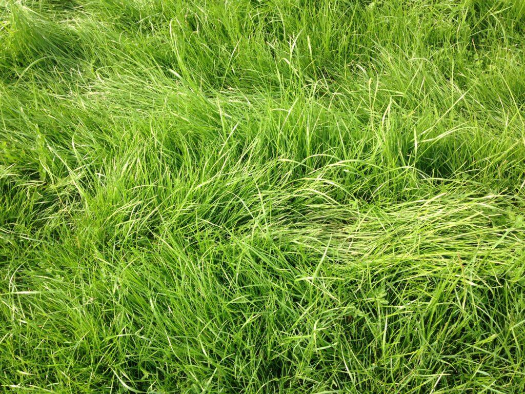 grass growth utilisation