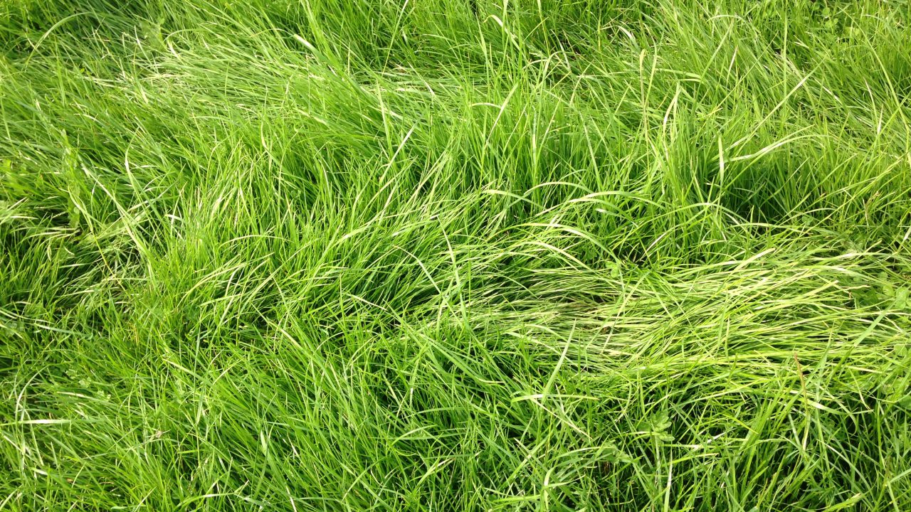 'Return on investment in utilisation of grass cannot be ignored'