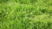 'Significant' improvements in grassland management still to be made