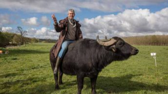 Cork buffalo farmer says 'cheese' for TV ad