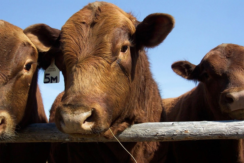 US beef moves a step closer to accessing 'enormous' Chinese market